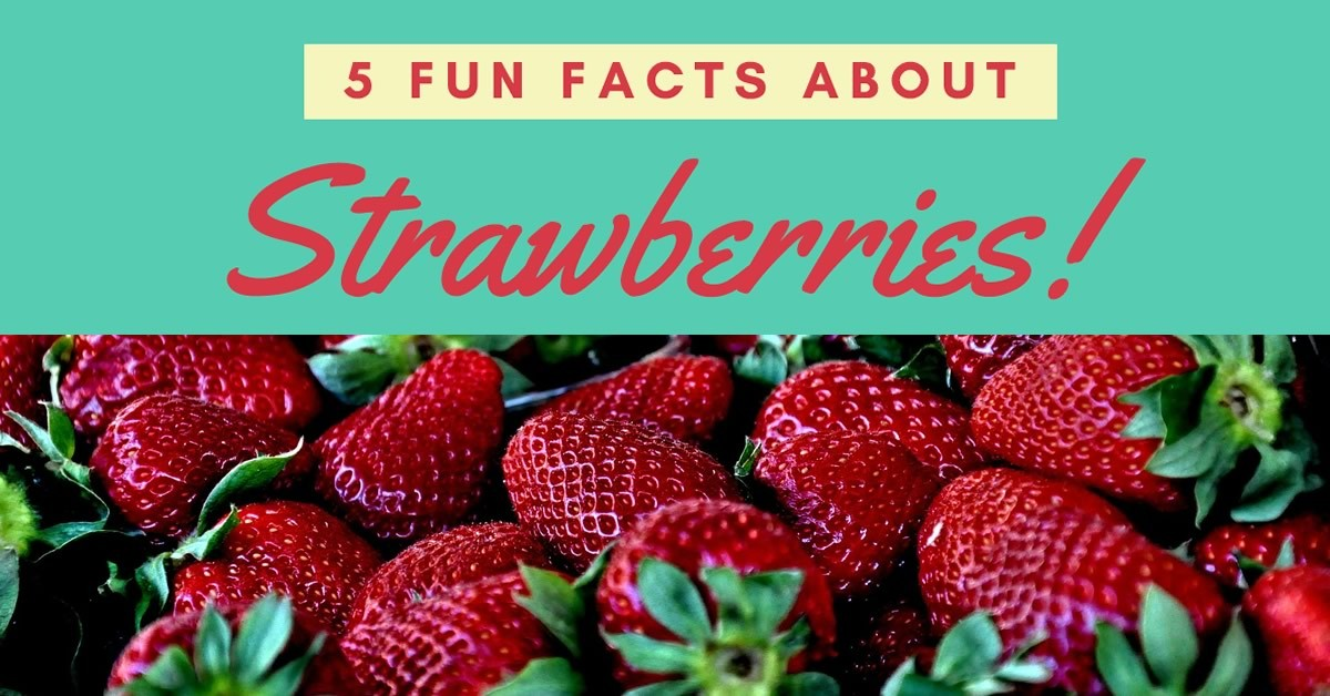 Infographic Fun Facts About Strawberries